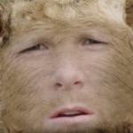 Profile picture of SurlyShrimp