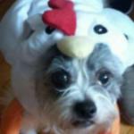 Profile picture of Zekeroo