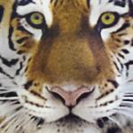 Profile picture of Elwinbu