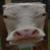 Profile picture of LuaPanic