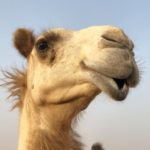 Profile picture of itzcamels