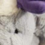 Profile picture of mysterri